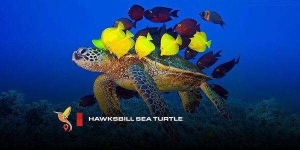 لاکپشتِ پوزهعقابی
